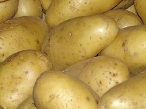 Mauvaise récolte pour les pommes de terre